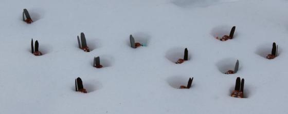 2013: Osterhasen im Schnee