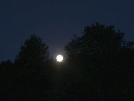 Mond zwischen Bäumen