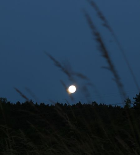 Mond in der Wiese