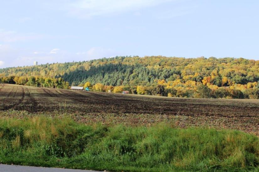 Der Mittelberg mit Aussichtsturm