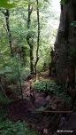 Beech Mountain Trail