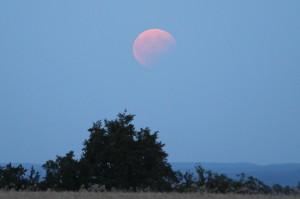 partiell verfinsterter Mond vom August 2017 über Bäumen