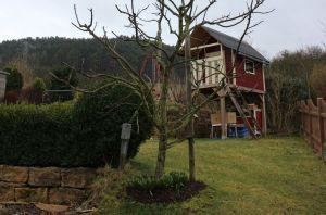 knospenloser Apfelbaum 2017