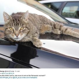 DLR_next #Projekt_4D Thema Haustier: Unser Kater liegt auf der Motorhaube und starrt in die Kamera