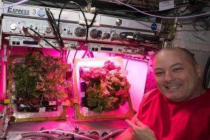 Scott Tingle vor in der ISS wachsendem Salat